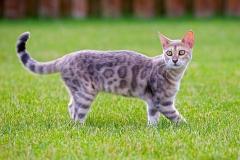 cat-3959046_960_720